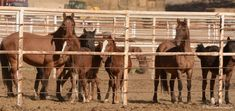Sign the petition to stop the round-up and slaughter of wild horses here! The…