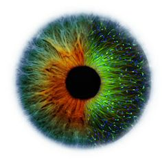 Fast forward to today and astem-cell biologist has had an eye-opening success. Yoshiki Sasai of the RIKEN Center for Developmental Biology (CBD) in Kobe, Japan, has grown the precursor of a human eye in the lab.