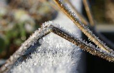 Iskold morgen på Rosengaarden - Nyheder fra Rosengaarden Bed and Breakfast