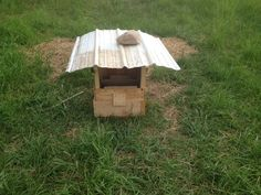 Chicken dust bath for laying hens