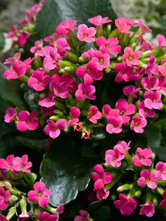 14 Of The Most Colorful House Plants That Are Hard To Kill Indoor Flowering Plantsflowering Succulentssucculent