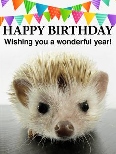 Cute Hedgehog Birthday Card This Sweet Little Wants To Wish Your Loved One A