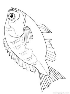 Coral Reef Coloring Pages  Coral  Free printable coloring pages