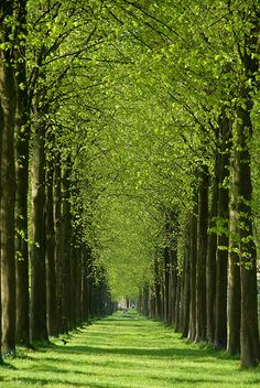 Green path, Het Loo (Royal Palace), Apeldoorn, Netherlands. #greetingsfromnl