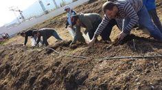 Noticias > Primer Curso de Lombricultura