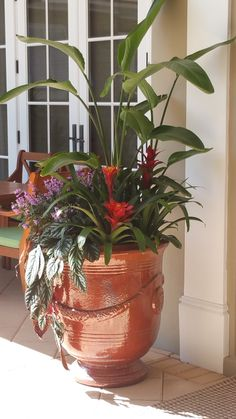 Vero Beach's Botanical Concepts - Welcome to Botanical Concepts. We have been serving the Vero Beach Area for over 18 years. Outside Living, Vero Beach, Planter Pots, Concept, Pictures, Photos, Grimm