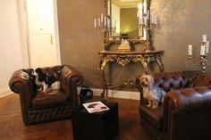 Unsere lieben Hunde im Salon: Cocker Spaniel & Yorkshire Terrier <3 Bambergerstr. 8, 10777 Berlin - im Salon Coiffeur Maurice - Wimpernverlängerung Wimpernextesions Wimpernverdichtung Lash Extensions Eyelash Berlin #wimpernverlängerung #wimpernextensions #wimpernverdichtung #lashextensions #eyelashextensions #lash #eyelash #berlin #dogs #hunde #yorkshireterrier #yorkshir #cockerspaniel Berlin, Cockerspaniel, Cocker Spaniel Puppies, Chesterfield Chair, Yorkshire Terrier, Studio, Living Room, Cocker Spaniel Pups, Pet Dogs