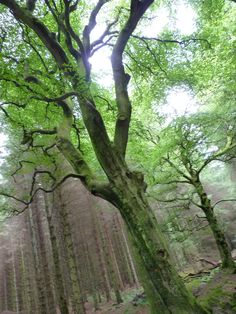 Trees in Beecraigs Country Park, Scotland