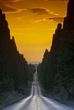 The Beautiful road, going all the way to the ocean - Bolgheri, Tuscany, Italy