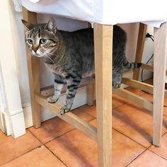 Good morning! 🤔 what are you doing Picco? #mygreatcat #my_loving_pet #cat #gatto #catoftheday #catsofinstagram #catstagram #gatti #instacat #instacat_meows #bestmeow #topcatphoto #miao #catlover #gatto #catoftheday #katze #gato #chat #猫  #neko #猫好き #Exellent_Cats #子猫 #プッシーキャット #ニャー #甘い #愛猫