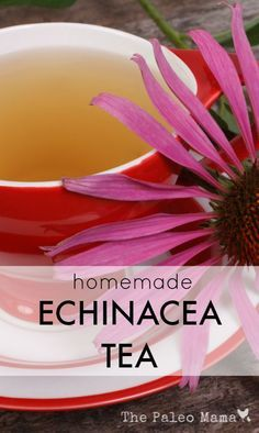 Echinacea is one of the best-known herbal remedies and the whole plant (roots, leaves, flowers) can be used to make a homemade Echinacea tea! http://thepaleomama.com/2015/07/homemade-echinacea-tea/