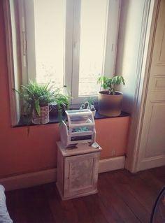 Intérieure salon/bureau plantes pour beaucoup bouturées DIY miroir ...