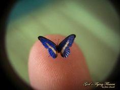 Blauwe Morpho Helena miniatuur Butterfly door GodsFlyingFlowers