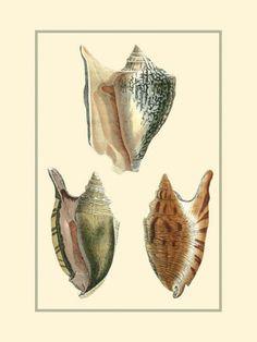 Classic Shells II Art Print