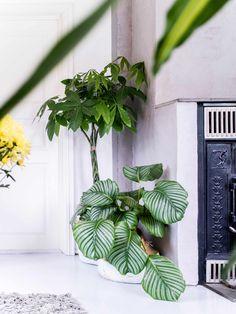 Interior Design, Plants, Blog, Nest Design, Home Interior Design, Interior Designing, Blogging, Home Decor, Plant