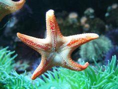 Estrellas de mar.15