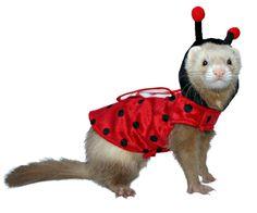 Ferret Lady Bug Costume