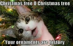 That's why I only decorate the top half with ornaments!