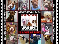 """6/13 Please Share! SUPER URGENT tap picture 17BEAUTIFUL LIVES OF DOGS TO SAVE 6/10TO BE DESTROYED STARTING 12NOON PLEASE SAVE US WE ONLY HAVE A FEW MINS / HOURS TO LIVE BEFORE WE GO TO DOGGY HEAVEN THANK YOU PLEASE REPIN AND SHARE THIS INFORMATION  TIME IS CRITICAL THANK YOU IRISH : . Please share! The shelter closes at 8pm. Go to the ACC website( http:/www.nycacc.org/PublicAtRisk.htm) ASAP to adopt a PUBLIC LIST dog (noted with a """"P"""" on their profile) and/or work with a rescue group if you…"""