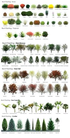 small evergreen shrubs for landscaping tree guide very helpful when choosing plants for landscaping small evergreen shade loving shrubs