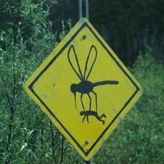 How big are the mosquitos?