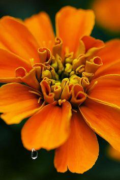 Starburst orange flower