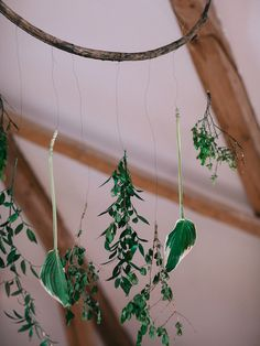 Seasons Of The Year, Plant Hanger, Wedding Reception, Wedding Decorations, Plants, Marriage Reception, Wedding Reception Ideas, Planters, Wedding Reception Appetizers