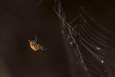 Recent shoots | Professional photographer Gauteng -