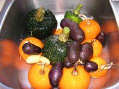 Planning Your Fall Harvest Garden