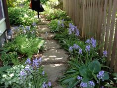 Even a narrow side yard can be a stunner.