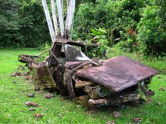 Abandoned car. A tree grows inside the back. The car was used by loggers up until the early 1980s.