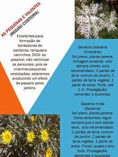 Barbara Paisagismo e Meio Ambiente: VALENTES