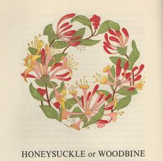 A Wreath Of Flower Legends Written in the by Rose Sydenham Dugdale it includes flower legends from all over the world and beautiful 'Flower Wreaths' illustrated by L Anne Ellis. Botanical Tattoo, Botanical Flowers, Botanical Prints, Honeysuckle Tattoo, Honeysuckle Flower, Honeysuckle Cottage, Art And Illustration, Floral Illustrations, Logo Floral