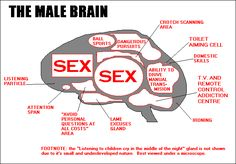 This illustration of a male brain demonstrates several exaggerations of stereotypical male behavior associated with hyper-masculinity including; Sexuality, Sports and physical fitness/ strength, inability to do household work.