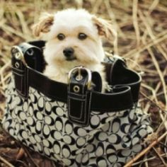 When I get a dog it WILL fit in a purse!!