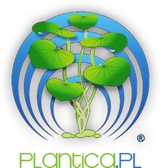 Technika CO2 | Plantica.pl