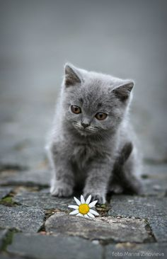 Grey kitten - so adorable, but place this same  kitty into a sunny backdrop instead of the grey and suddenly the kitty is happy.....something to think about.....