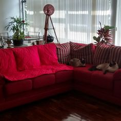House sitting job - Belo Horizonte - State of Minas Gerais, Brazil - Image 1