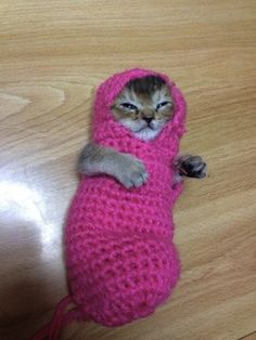 The Web loves a good cat picture. But when the photo shows kitten in a crocheted outfit, the Internet takes a collective swoon. The images of the teeny feline have been tweeted by the kitten's owner, known by her Twitter handle, @Jessie Poncin. The kitten, dubbed Wasabi-chan, was taken in after being badly injured by a bird. (The Upbeat on Y! News)