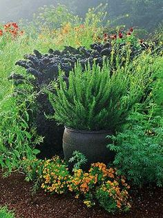 Nancy Heckler's Garden. Combining edible and ornamental. Pot of Rosemary in front of 'Redbor' kale. Phot by Valerie Easton, Garden design by Nancy Heckler. Originally published in Public Northwest Magazine. This post: The one Plant Pot, Thomas Rainer, grounded design blog, August 20, 2011.