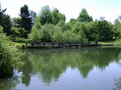Commonwealth Lake Park is a good fishing spot for young anglers. It also has a nice bike bath around the outside of the lake. Beaverton Oregon, Lake Park, Best Fishing, Commonwealth, Portland Oregon, Summer Fun, Ash, The Neighbourhood, Camping