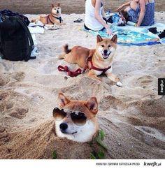 Pieski kochają plażę!