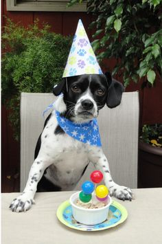 201 Best Happy Birthday Images Birthday Greetings