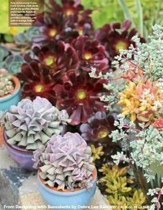 Nueva edición de Designing with Succulents. Aprendiendo a diseñar con suculentas