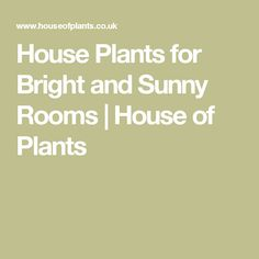 House Plants for Bright and Sunny Rooms | House of Plants