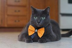 Tiny models one of Tiny's Ties near Halloween. Tiny's Ties are handmade by volunteers and sold on Etsy, with proceeds going to medical funds for special-needs pets like Tiny. #tiny #biggestloser #fitspo