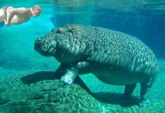 If animal names were honest. I think my 2 favorites are Leather Submarine (manatee) and Majestic Sea Flap Flap (stingray) Funny Animal Names, Funny Names, Animal Jokes, Funny Animal Pictures, Funny Animals, Cute Animals, Baby Animals, Animal Sayings, Animal Humour