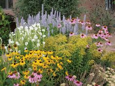The perennials in this garden are matched for ease of care and  bloom time, as well as soil, water and cultural preferences. These summer blooms can survive on little water once established.