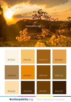 Yellow Sky Sunlight Color Palette #colors #inspiration #graphics #design #inspiration #beautiful #colorpalette #palettes #idea #color #colorful #colorscheme #colorinspiration #colorcombinations #colorcombos #colorpalette_org Colour Pallette, Colour Combo, Colour Schemes, Bathroom Colours, Color Palette Challenge, Web Design, Yellow Sky, Design Seeds, Floral Patterns
