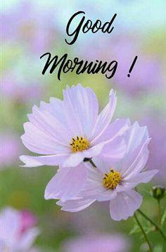 Rainy Morning Quotes, Good Morning Flowers Pictures, Good Morning Image Quotes, Good Morning Cards, Good Morning Beautiful Quotes, Good Morning Images Hd, Good Morning Coffee, Good Morning Greetings, Good Morning Good Night